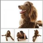 Poodle dog photos