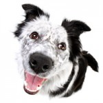Pet Photogrpahy