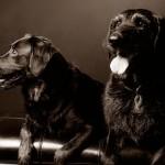 Pet Dog Photography Perth
