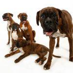 5 pet dogs
