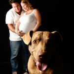 Pregnancy Pet Photo